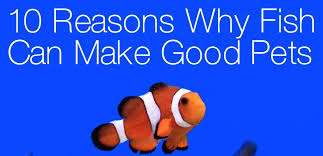 10 Rеаѕоnѕ why Fish can Make Good Pets