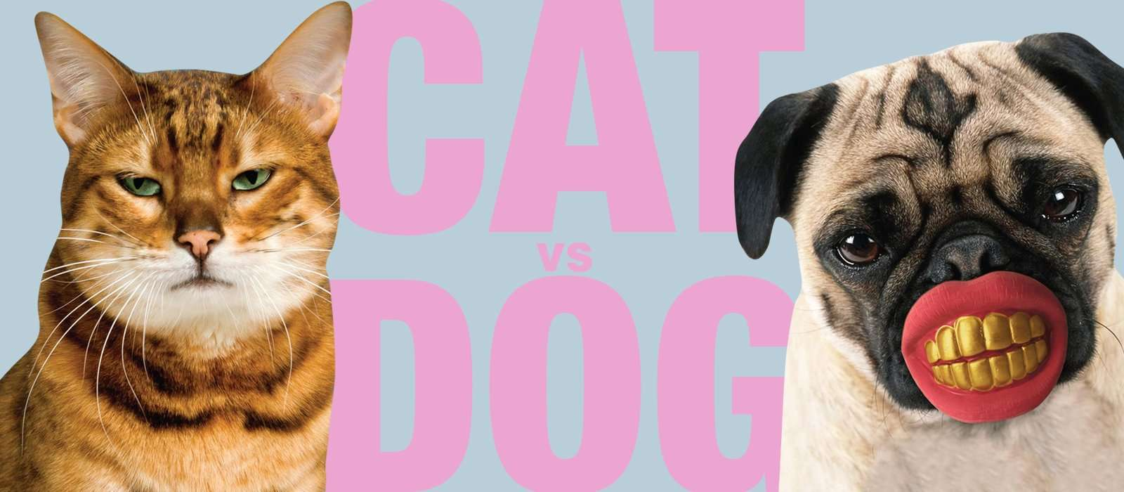Cats Vs Dogs: Which is a better pet for you?