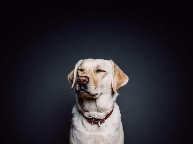 Dog Post 01