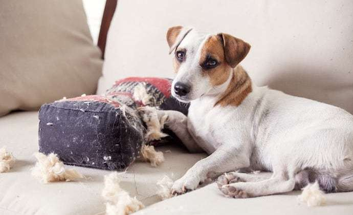 How do I Deal with My Dog's Separation Anxiety?
