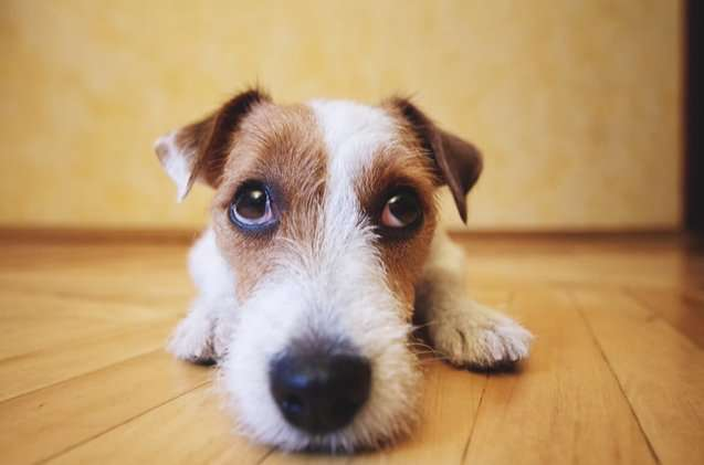 Know Everything About Autism In Dogs