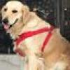 Aryan Dog's Kennel