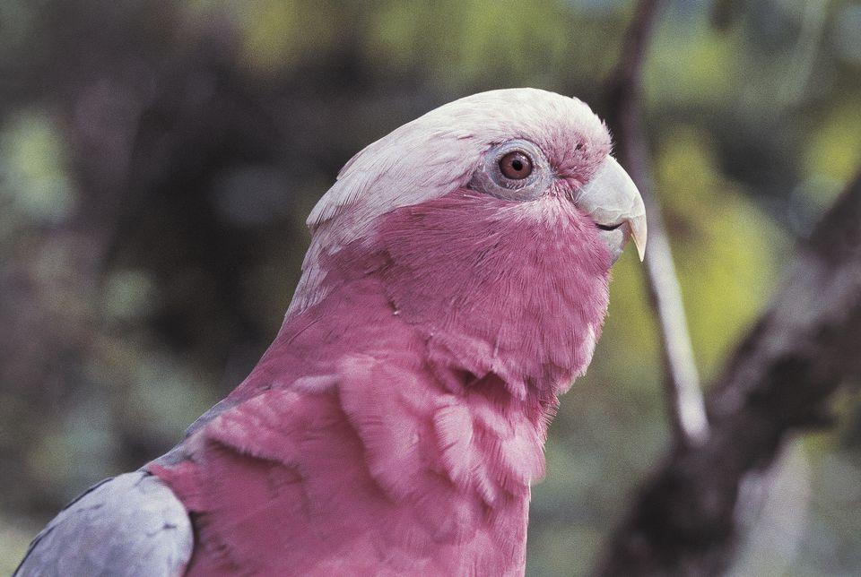 Pin On Cockatoos