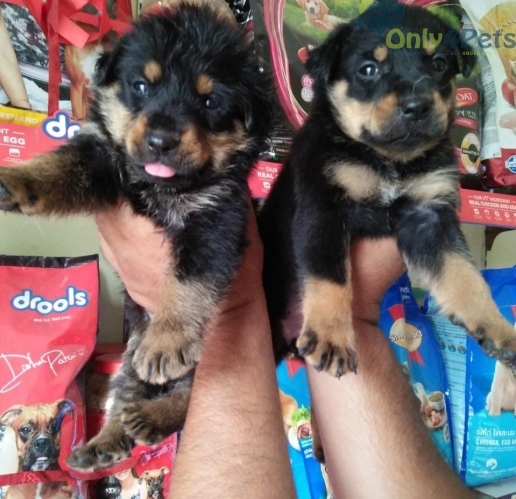 all types of breed puppies available