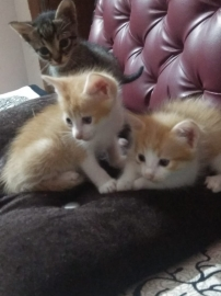 cute kittens for adoption