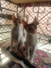 Sale of 2 kittens 4 months
