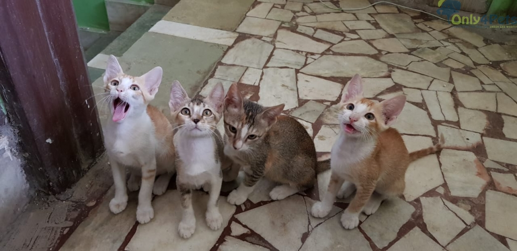 FOUR KITTENS IN NEED OF ADOPTION