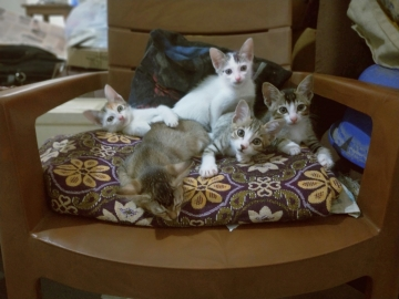 3 month old 5 kittens.