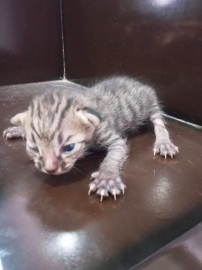 New Born cute kittens for Adoption