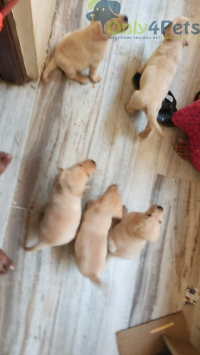 5 lab available