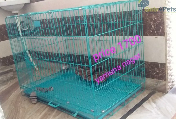 Cage for sale one month used new condition