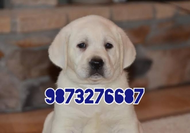 Puppies Sell