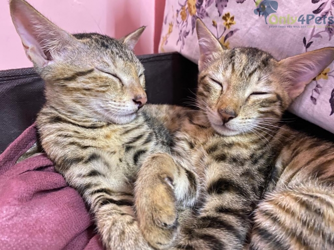 Two kittens up for adoption