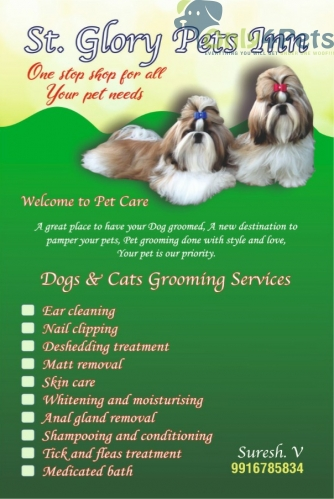 pet grooming at soldier pets