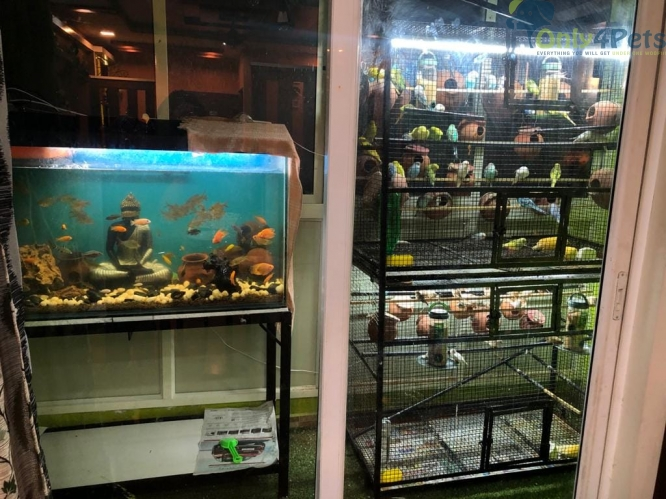 40  ready to breed finches with cage