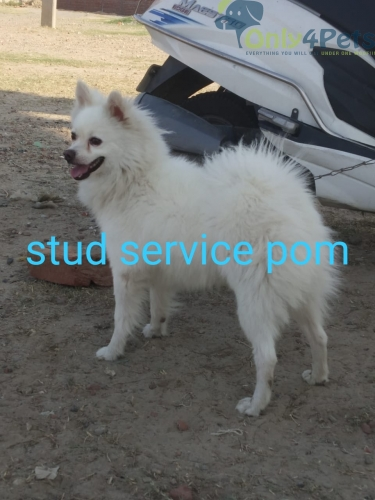 Stud service available