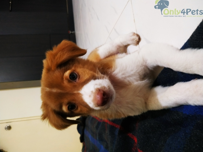 cute puppy for adoption