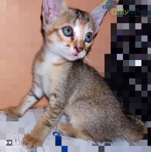 cute kittens available for adoption